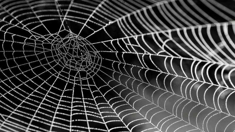 Is Your Strategic Plan Collecting Cobwebs?